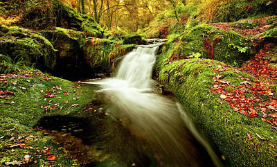 Poster featuring the photograph Forest Stream by Jorge Maia