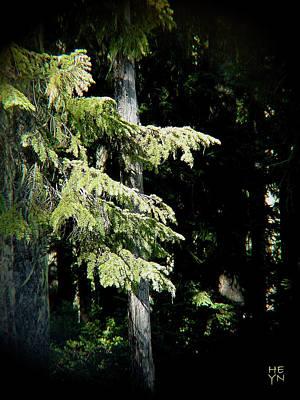Forest Sunlight - 1 Poster by Shirley Heyn