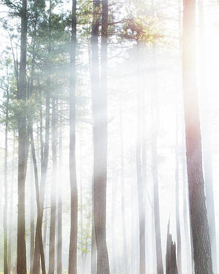Forest Trees In Dense Fog With Sunlight Poster