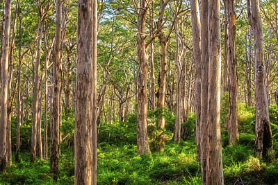 Poster featuring the photograph Forest Twilight, Boranup Forest by Dave Catley