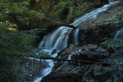 Forest Waterfall. Poster