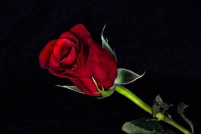 Forever Lasting Rose  Poster