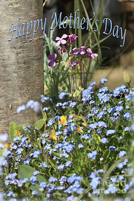 Forget-me-not On Mother's Day Poster