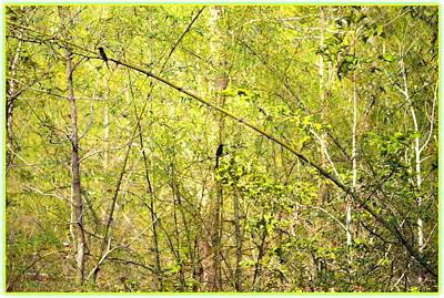 Fork Tailed Drongo Poster by Sonali Gangane