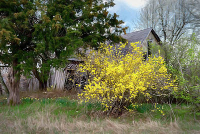 Forsythia And Old House Poster by James Barber