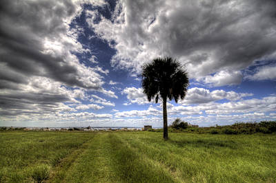 Fort Moultrie Palm  Poster by Dustin K Ryan