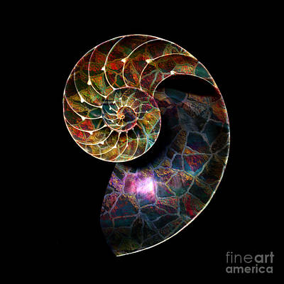 Poster featuring the digital art Fossilized Nautilus Shell by Klara Acel