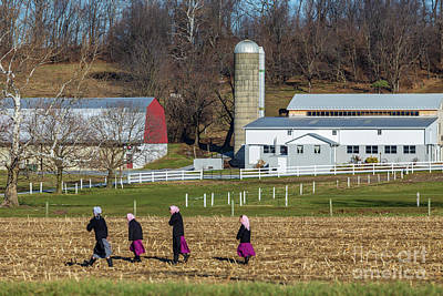 Four Amish Women In Field Poster