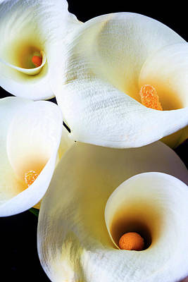 Four Graphic Calla Lilies Poster by Garry Gay