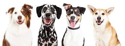 Four Happy Dog Closeups Poster by Susan Schmitz