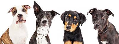 Four Mixed Breed Dogs Closeup Poster by Susan Schmitz