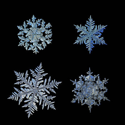 Four Snowflakes On Black Background Poster by Alexey Kljatov