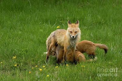 Fox Family Poster