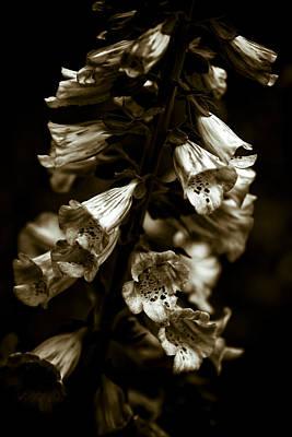 Foxglove Flowers Poster