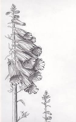 Foxglove Poster by Janel Bragg