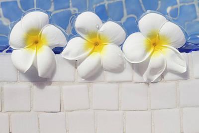 Frangipani Flowers Poster by Laura Leyshon