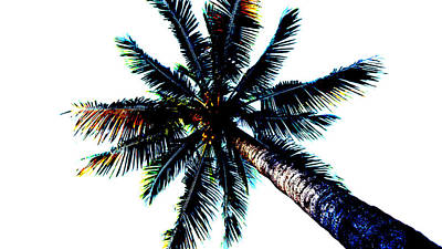 Frazzled Palm Tree Poster