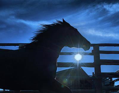 Free Spirit Horse Poster