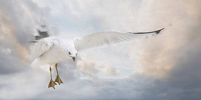 Poster featuring the photograph Free To Fly by Robin-Lee Vieira