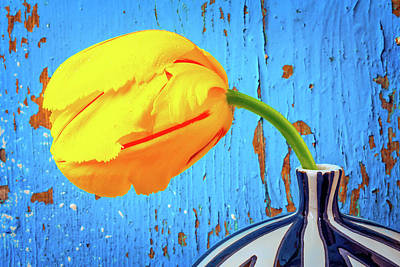 French Tulip Against Blue Wall  Poster by Garry Gay