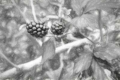 Fresh Alabama Blackberries In Black And White Poster by JC Findley