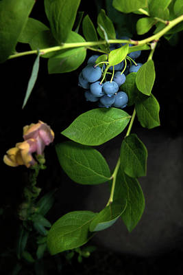 Fresh Blueberries Poster by K Powers Photography