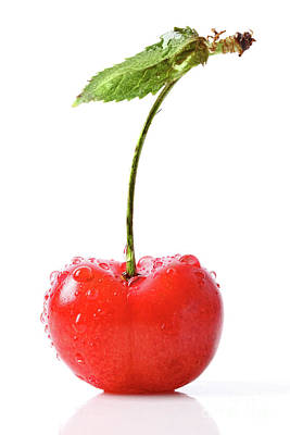 Fresh Red Cherry Isolated On White Poster by Sandra Cunningham