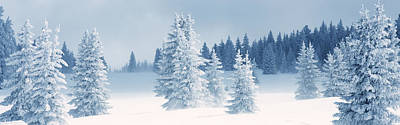 Fresh Snow On Pine Trees, Taos County Poster by Panoramic Images