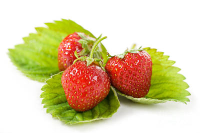 Fresh Strawberries Fruits Lying On Leaf On White  Poster