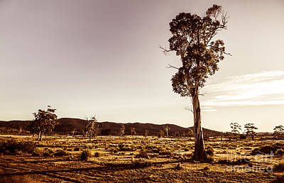 Freycinet Bushland Background Poster by Jorgo Photography - Wall Art Gallery