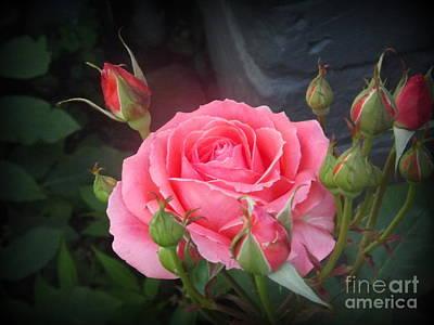 Friendship Rose Poster