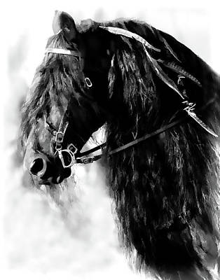Friesian Horse Beauty Poster by Athena Mckinzie