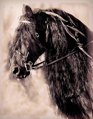 Friesian Horse Beauty II Poster by Athena Mckinzie