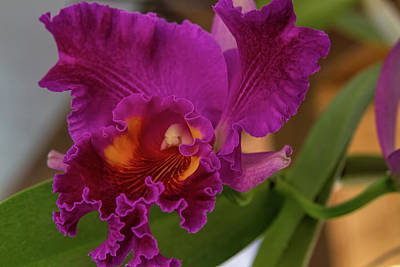 Frilly Orchid Poster
