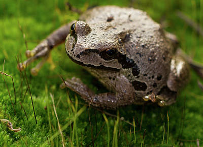 Frog On The Grass Poster by Jean Noren