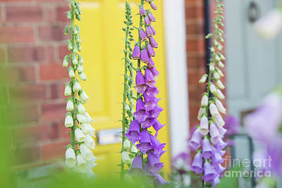 Front Garden Foxgloves Poster by Tim Gainey