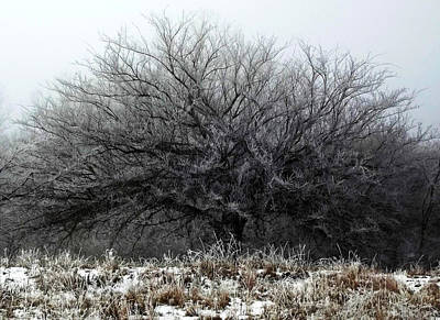 Poster featuring the photograph Frosted Elm by Shelli Fitzpatrick