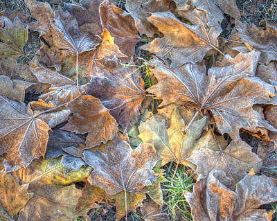 Frosted Leaves 8x10 Poster