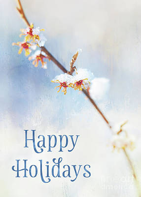 Frosted Witch Hazel Blossoms Holiday Card Poster