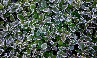 Frosty Hedgerow Poster