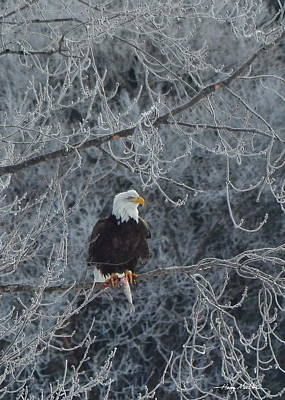 Frosty Morning Eagle Poster