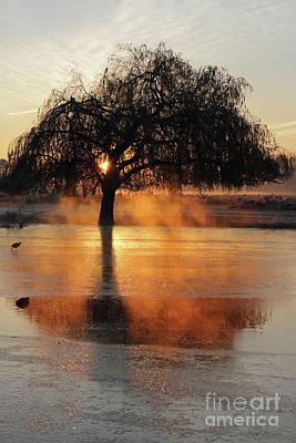 Frosty Sunrise In Bushy Park London 2 Poster