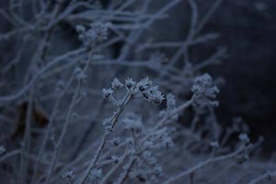 Frozen Buds Poster