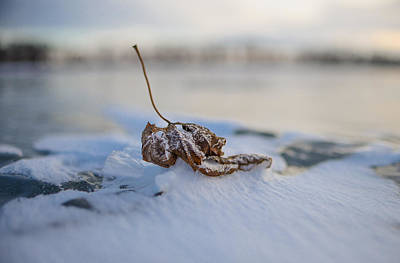 Frozen Leaf On Lake Reno Poster