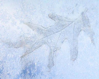 Frozen Oak Leaf Imprint Poster by Kathy M Krause