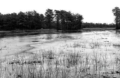 Frozen Pineland Pond Poster by John Rizzuto
