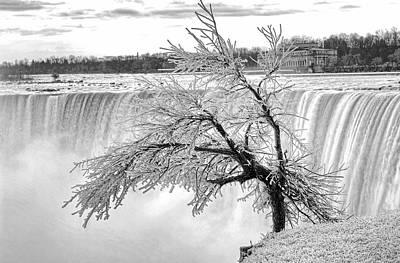 Frozen Tree Near Niagara Falls Poster