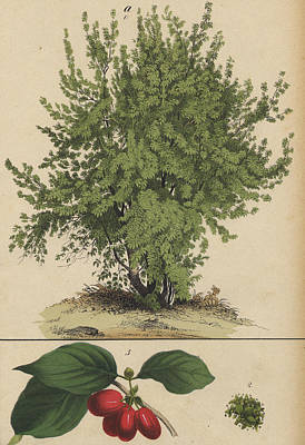 Fruit Bush Poster