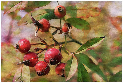 Fruit Of The Wild Rose Poster by Margie Wildblood