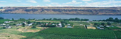 Fruit Orchards, Columbia River Gorge Poster by Panoramic Images